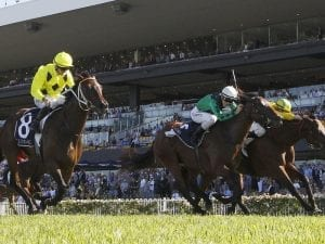 Coolmore Classic preview