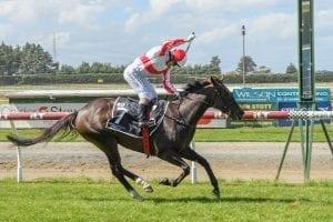 NZ horse Global Thinking