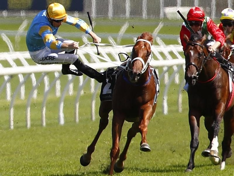Jockey Hugh Bowman falls from Performer in race 4