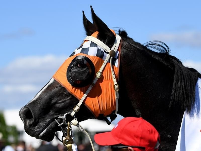 Ace High after winning the Victoria Derby.