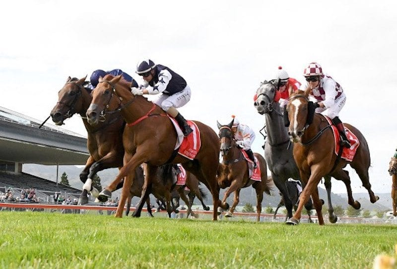 Find the Best Horse Betting Tips & Odds