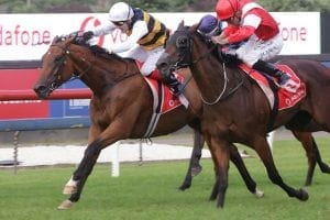 Four runners a possibility for Baker and Forsman in Australian Derby