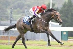 Aussie G1 dates loom for Kiwis