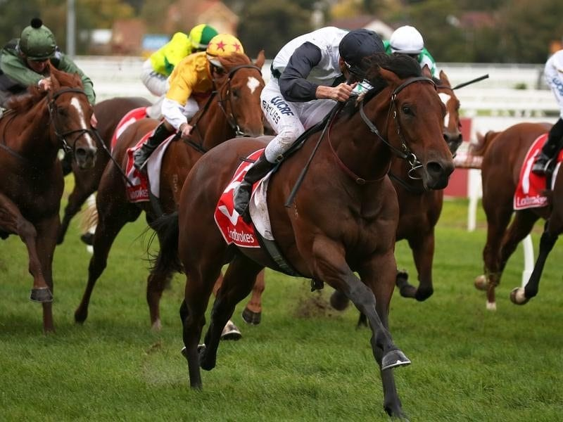 Ocean Knight wins at Caulfield.