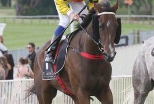 Te Rapa race the likely goal for Chicane