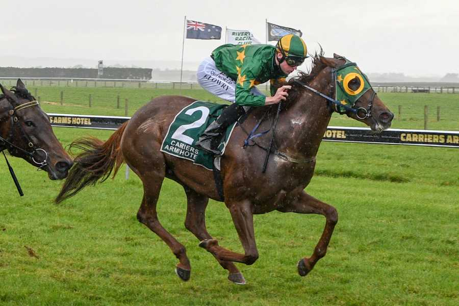 NZ horse Fascinate