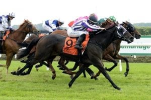 Trainer sees top future for Fawn