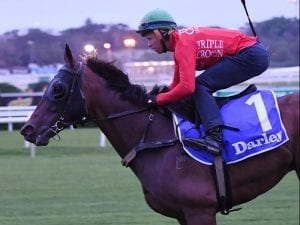 Redzel best sprinter I've ridden: McEvoy