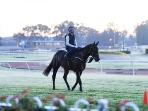 Winx to race with synthetic hoof filler