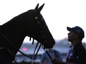Champion mare Winx's 25 consecutive wins