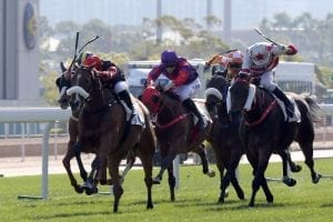 Giant Turtle 'all heart' and set for more success, says Rispoli