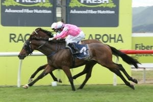 Highlad takes out Te Aroha Cup Enigmatic stayer