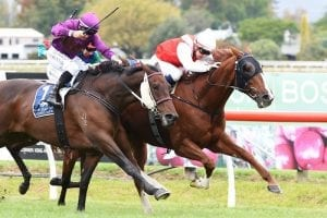 Tactical ride pays dividends for Collett and Londaro at Hastings