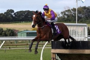 Training pair Chime in with jumps win across Tasman