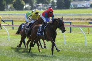 Team Rogerson pair poised to confront Champagne Stakes