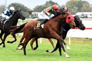Richie McHorse headlines double for Trelawney Stud at Hastings