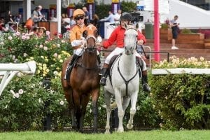 Rising Red prepares for late Sydney charge
