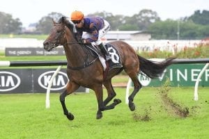 Stakes challenge on cards for Roman Son