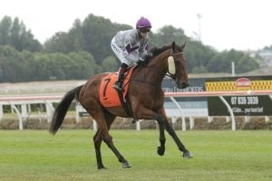 Ormsby hoping for St Leger scratching