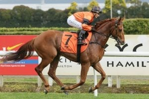 Trainer Optimistic about Simply's future