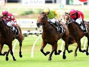 Shamurt too good for plunge horse