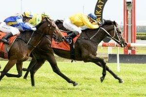 Ugo Foscolo returns to winning form at Te Rapa