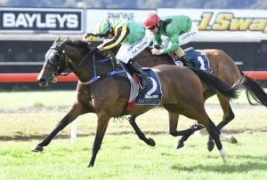 NZ Cup hopes for Aigne