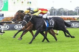 Almighty Crown bound for Queensland Derby