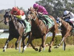Beidi off and running in Canterbury win