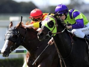 Heavenly Thought firms for G1 Qld Derby
