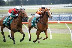Ground to suit mare's home track bid