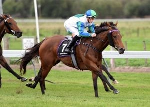 Rotorua finale for group quality mare