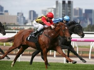 Two in a row for Vassilator at Flemington