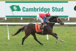 Stayers give stable top Te Rapa chances