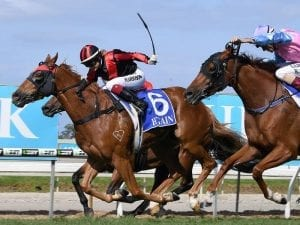 Dreams Aplenty fights hard for Cup victory