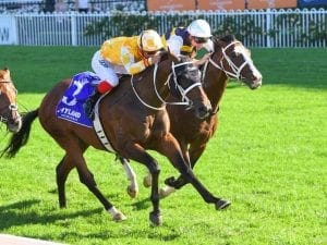 Tom faces challenge from stablemates
