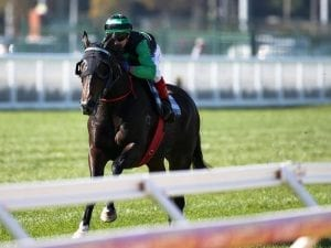 Super Cash chases better luck in Goodwood