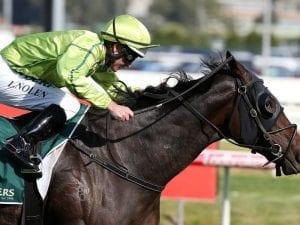 Self Sense among Australian Hurdle entries