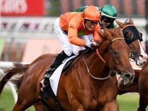 Terravista retired from racing