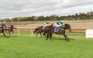 Brother of Cup winner wins at Hamilton