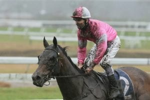 Stayer posts timely Cup success