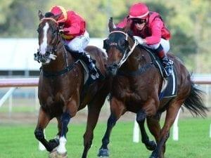 Banner Season earns Queensland Derby berth