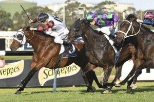 King Darci rules tight finish at Rosehill