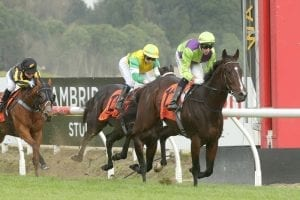 Mihaul's winning habit continues at Te Rapa