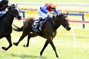 Blinkers to bring out best in Pop Star Princess