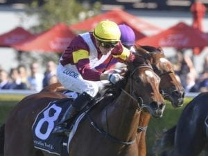 Touch Of Mink to return to stakes class