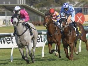 Blinkered Albumin in overdue Rosehill win
