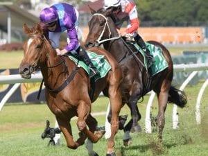 Lisdoonvarna bounces back in Rosehill win