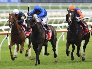 Maturing Nettoyer targets Lord Mayor's Cup