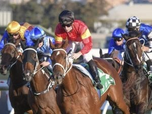 Fitting win for I Am Serious at Rosehill